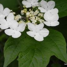 Je cherche le nom de cette fleur. En fait c'est plutôt un arbuste...