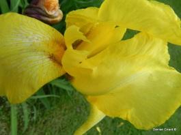 iris sans bibite je préfère...