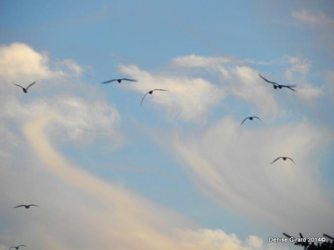 ciel d'oiseaux