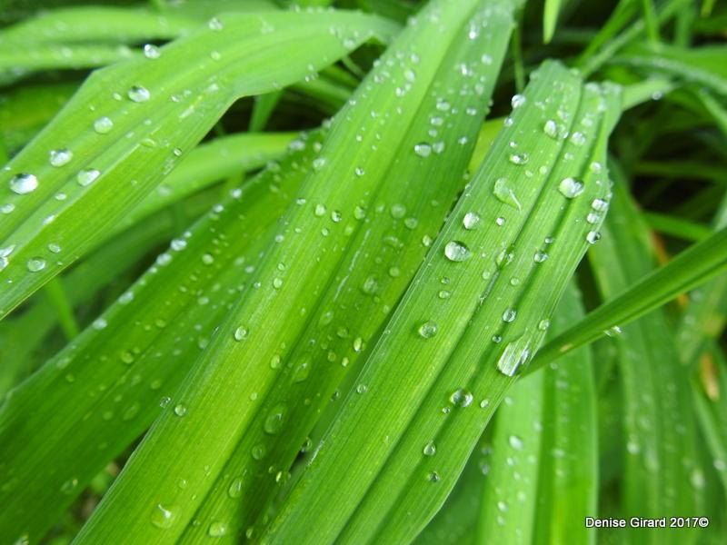feuillage et gouttes de pluie