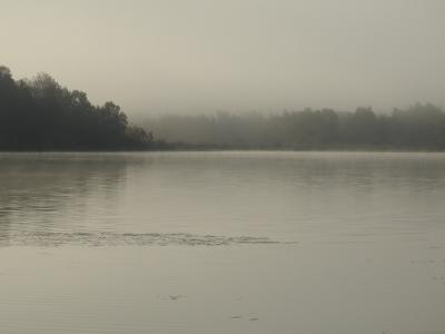 Brume d'un matin.